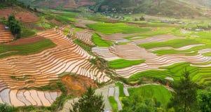 Terrasserad ricefield i vattensäsong på Mu Cang Chai, Vietnam Royaltyfri Bild