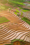 Terrasserad ricefield i vattensäsong på Mu Cang Chai, Vietnam Royaltyfria Bilder