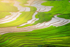 Terrasserad ricefield i vattensäsong på Mu Cang Chai, Vietnam Royaltyfri Fotografi