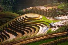 Terrasserad ricefield i vattensäsong på Mu Cang Chai, Vietnam Royaltyfria Foton