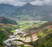 Terrasserad ricefield i vattensäsong på Mu Cang Chai, Vietnam Arkivbilder