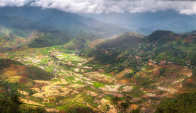 Terrasserad ricefield på den Vietnam vattensäsongen Royaltyfri Foto