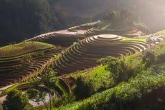 Terrasserad ricefield på den Vietnam vattensäsongen Royaltyfria Foton