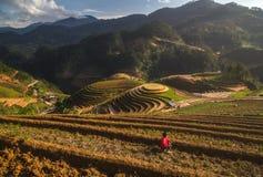 Terrasserad ricefield på den Vietnam vattensäsongen Arkivbild