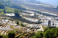 Terrasserad risfält av Hani etniskt folk i Yuanyang, Yunnan landskap, Kina arkivbilder