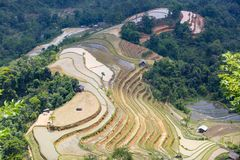 terrasserad risfält i Hoangsuphi, Hagiang, säsong av hällande vatten Royaltyfria Bilder