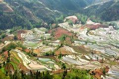 Terrasserad risfält i Kina Fotografering för Bildbyråer