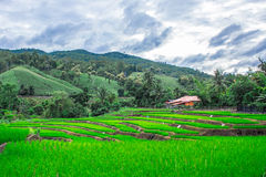 Terrasserad risfält i Maejam, Chiangmai, Thailand arkivfoton