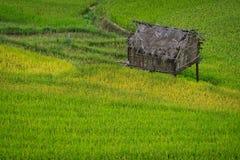Terrasserad risfält i Mu Cang Chai, Vietnam arkivbild
