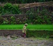 Terrasserad risfält i nordliga Vietnam Arkivfoto