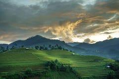 Terrasserad risfält i skördsäsong i Mu Cang Chai, Vietnam Arkivfoton