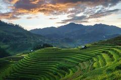 Terrasserad risfält i skördsäsong i Mu Cang Chai, Vietnam Mam Xoi populär loppdestination Royaltyfri Foto