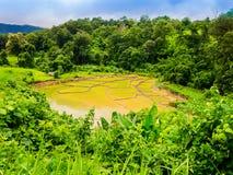 Terrasserad risfält i Thailand Arkivfoton