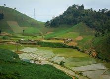 Terrasserad risfält i vattensäsong i Moc Chau Royaltyfria Bilder