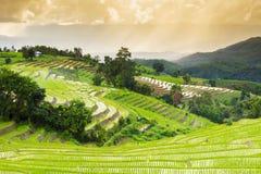 Terrasserad risfält med solstrålar och dramatisk himmel i PA Pong Pieng Chiang Mai Thailand Royaltyfri Bild