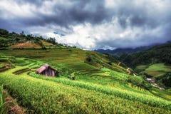 Terrasserad risfältsikt, LaPA-solbränna, Vietnam Arkivfoto