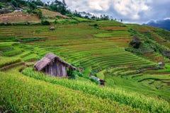 Terrasserad risfältsikt, LaPA-solbränna, Vietnam Arkivfoton