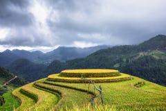 Terrasserad risfältsikt, LaPA-solbränna, Vietnam Arkivbilder