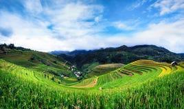 Terrasserad risfältsikt, LaPA-solbränna, Vietnam Fotografering för Bildbyråer