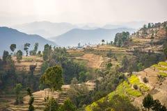 Terrasserade backar i Nepal royaltyfri fotografi