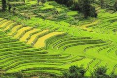 terrasserade fält Arkivfoto