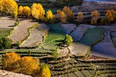 terrasserade fält Royaltyfria Bilder
