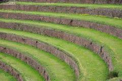 Terrasserade fält i det arkeologiska området för Inca av Pisac, Peru fotografering för bildbyråer