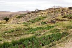 Terrasserade fält i Socaire, Chile Royaltyfri Fotografi