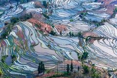 Terrasserade fält i yunnan landskap Royaltyfri Foto