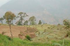 Terrasserade fält på ett berg i Nepal royaltyfria foton