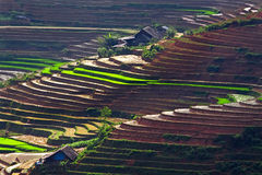 Terrasserade ricefält Royaltyfria Foton
