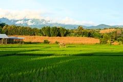 Terrasserade ricefält i nordliga Thailand Fotografering för Bildbyråer