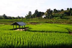 Terrasserade ricefält i nordliga Thailand Arkivbilder
