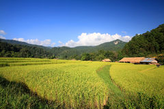 Terrasserade ricefält och bondehus arkivbilder