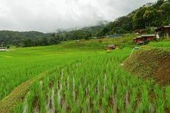 Terrasserade ris och landskap Chiang Mai Arkivbild