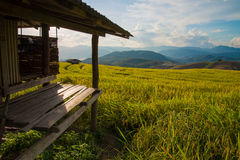 Terrasserade ris på berget, Chiangmai Thailand royaltyfria foton