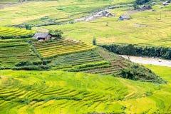 Terrasserade risfält Arkivfoto