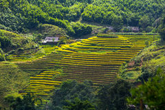 Terrasserade risfält Fotografering för Bildbyråer