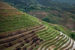 Terrasserade risfält, i den Dazhai byn, Guangxi, Kina Royaltyfria Foton