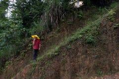 Terrasserade risfält, i den Dazhai byn, Guangxi, Kina Fotografering för Bildbyråer