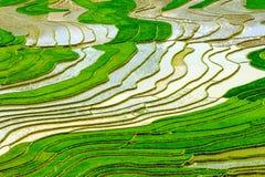 Terrasserade risfält i Vietnam Arkivfoto