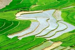 Terrasserade risfält i Vietnam Arkivbilder