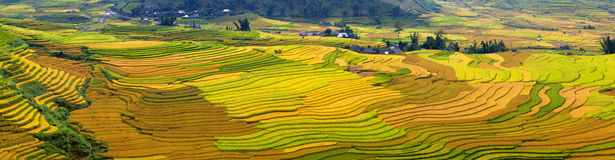 Terrasserade risfält i Vietnam Arkivbild
