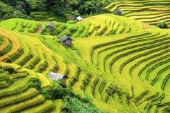Terrasserade risfält och liten by i Vietnam Fotografering för Bildbyråer