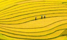 Terrasserade risfält - tre kvinnor besöker deras risfält i Mu Cang Chai, Yen Bai, Vietnam Arkivfoton