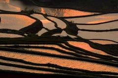 terrasserat fält arkivbilder