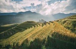 Terrasserat i Sapa, Vietnam arkivbilder