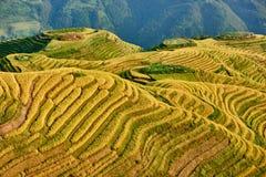 Terrasserat ris sätter in den Wengjia longjien Longsheng Hunan Kina Royaltyfria Foton