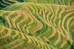 Terrasserat ris sätter in den Wengjia longjien Longsheng Hunan Kina Royaltyfri Fotografi