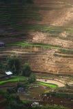 Terrasserat risfältlandskap nära Lapantan i Vietnam Arkivfoto